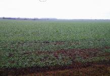 crops of winter crops