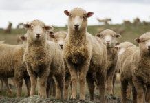 підтримка тваринництва